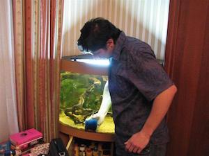 Чистка стекол в аквариуме