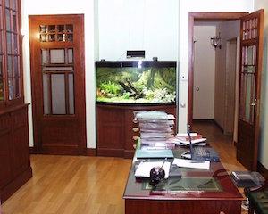 Совместим ли офис с аквариумом