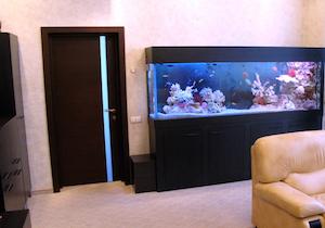 Офис и аквариум