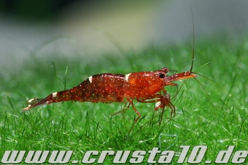 Индонезийские креветки