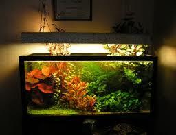 Дампы в аквариуме