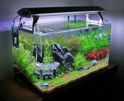 Декоративный аквариум