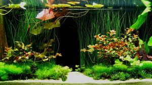 Специальные аквариумы