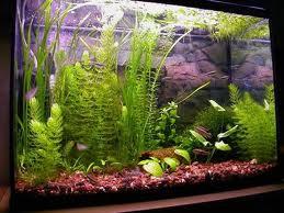 Дезинфицируем аквариум