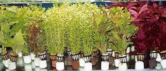 Растения в горшочках