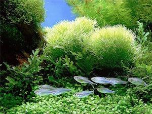 Оформляем аквариум