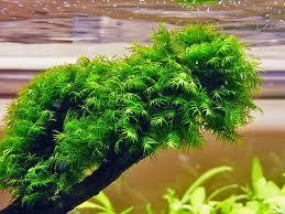 Растения на коряге