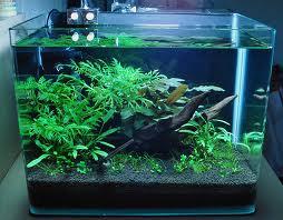 Выбор аквариума