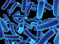 Vibrio alginolyticus