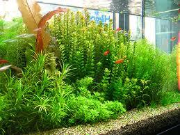 Бизнес выращивание в аквариуме 21
