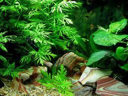 Посадка растений в аквариуме