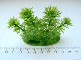 Пластиковое растение