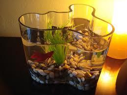 Аквариум в вазе
