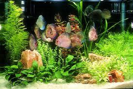 Создание аквариума