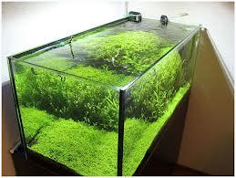 Каким должен быть аквариум внешне