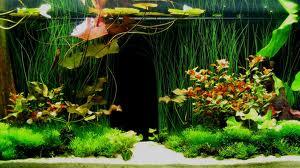 Проблемы в аквариуме