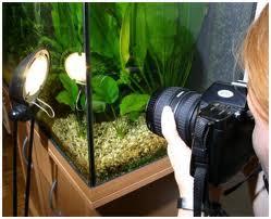 Фотографируем аквариум