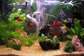 Фильтрация воды в аквариуме