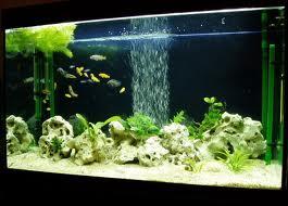 Аэрация в аквариуме