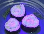 Светящиеся суши