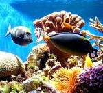 Жизнь в океане