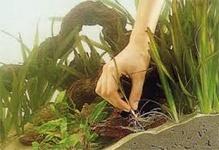 Высадка аквариумных растений