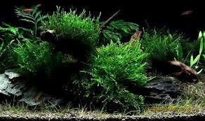 Озеленение камней и коряг