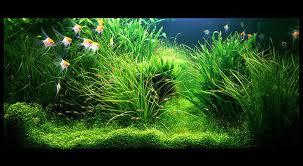 Озеленение аквариума