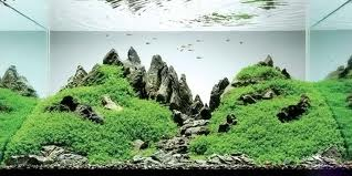 Японский аквариум