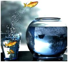 Подмены воды в аквариуме