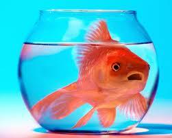 Размер рыбок в аквариуме