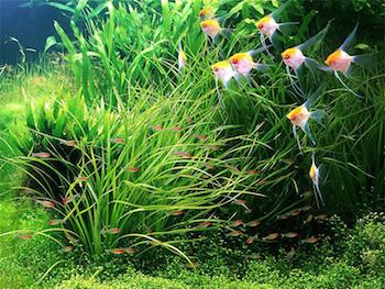Осмотическая вода в аквариуме
